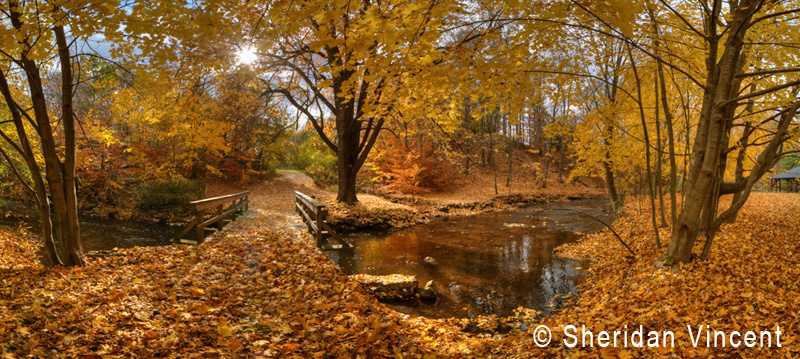 Yellow Leaf Bridge by Sheridan Vincent