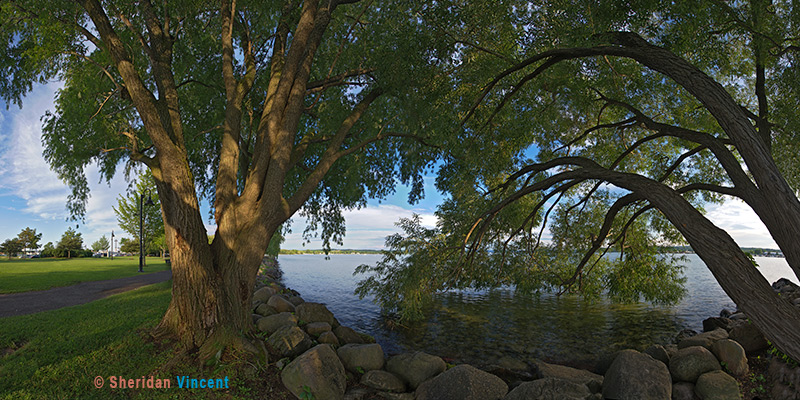 Boughs on Canandaigua Lake by Sheridan Vincent